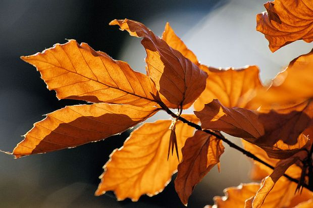 800px-Autumn_leaves_sceenario