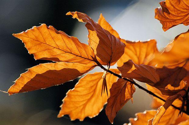 800px-Autumn_leaves_sceenario